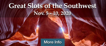 great slots safari nov 2020